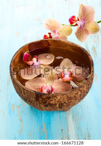 Orchid in coconut bowl - stock photo