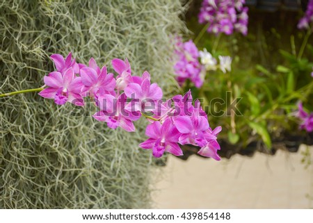 orchid in garden - stock photo