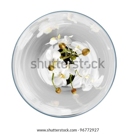 Orchid in vase - stock photo