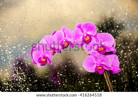 Orchid in window on rainy glass, violet fresh flower ,pink flowers ,flowers in window,pink orchids ,amazing orchids ,violet orchids ,lovely orchids ,orchids inside ,spring flowers ,flowers on black