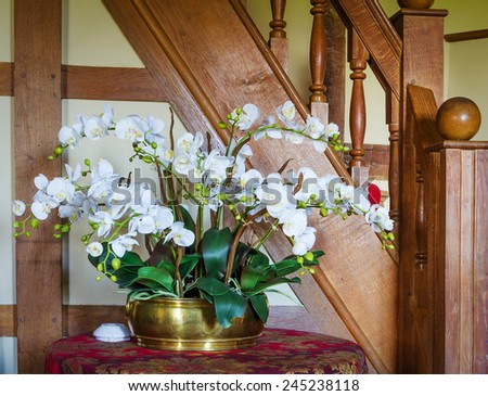 Orchid indoors - stock photo