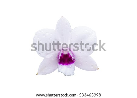 orchid isolate on white background.
