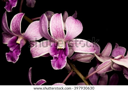 orchid isolated on black - stock photo