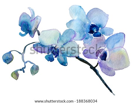 orchid isolated on white background. watercolor painting - stock photo