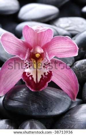 Orchid on pebbles - stock photo