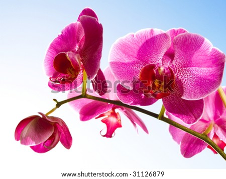 orchid on the blue, sunny sky - stock photo