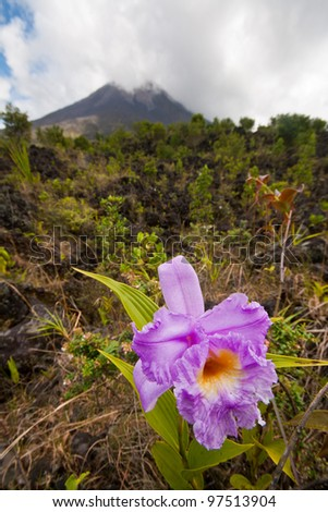 Orchid on the slopes of Arenal Volcano, Costa Rica - stock photo