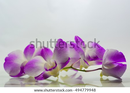 orchid on white blackground