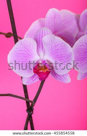 orchid, orchid flower, orchid bloom, beautiful orchid - stock photo