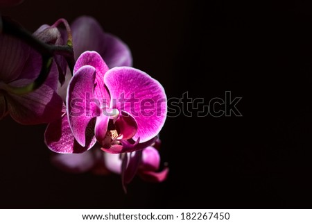 Orchid. Orchid on a dark background.