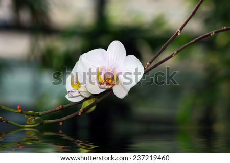 orchid portrait on a green background - stock photo