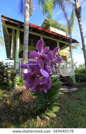 Orchid Tree House - stock photo