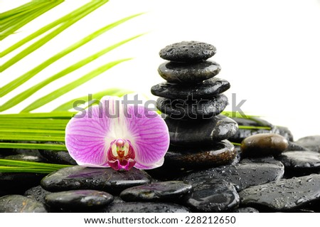 orchid with and set of palm, on wet pebbles - stock photo