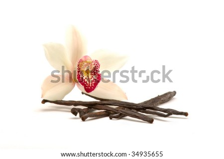 Orchid with vanilla beans on white background - stock photo