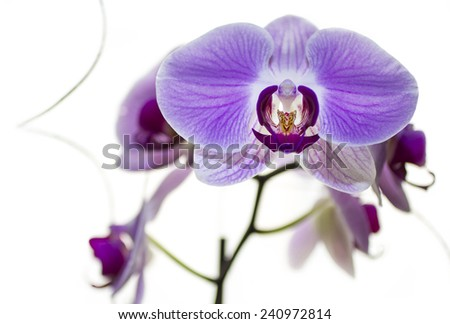 Orchidaceae is a diverse and widespread family of flowering plants with blooms that are often colourful and often fragrant, commonly known as the orchid family.  - stock photo