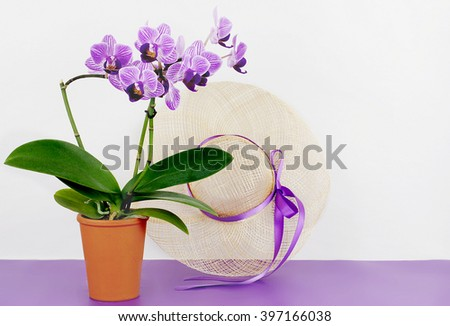 Orchidaceae Phalaenopsis, or moth orchid in a terrac cotts pot on a purple and white background with spring style straw hat. Copy space - stock photo