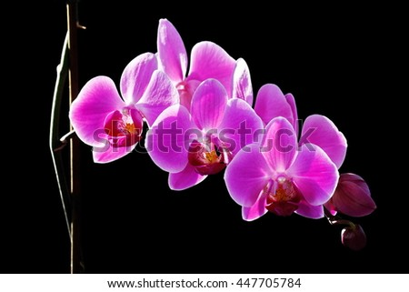 Orchidee - stock photo
