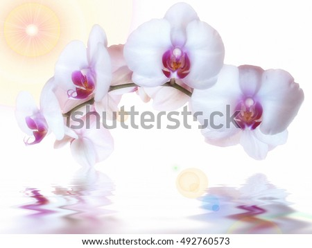 orchids and reflection in the water