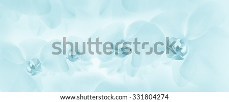 Orchids blue background - stock photo
