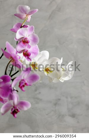 orchids close up - stock photo