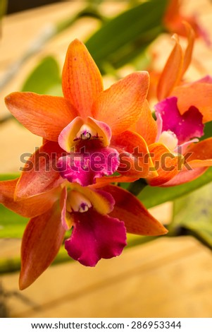 Orchids, flowers, orange, fresh, bright, beautiful, background.