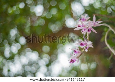 orchids on nature with a blurry bokeh background