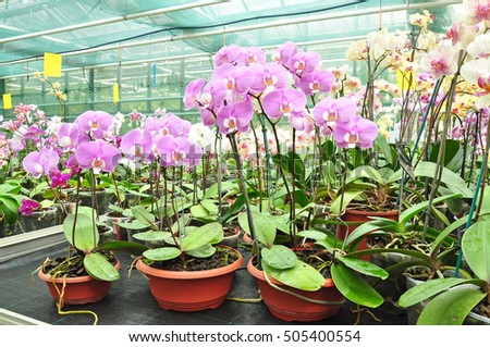 Orchids orchid planted plants greenhouse