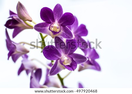 purple orchid stock images, royaltyfree images  vectors, Beautiful flower