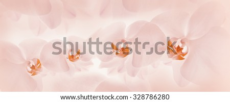 Orchids pink background - stock photo