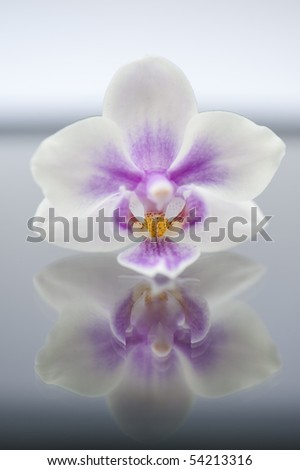 orcid - stock photo