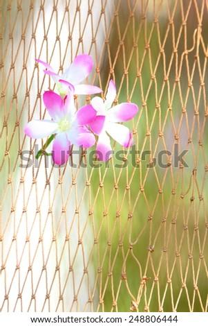 Orcid on net background - stock photo