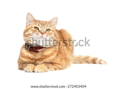 Ordinary domestic ginger cat on white background - stock photo