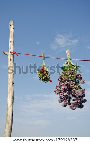 oregano  and wild strawberry herbs bunch on red clothes string