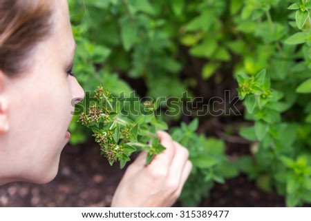 oregano outdoor in the garden, woman is picking some and smelling on it