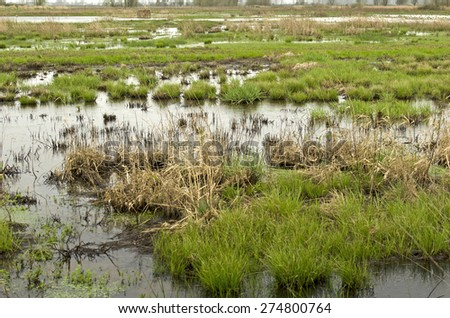 Oregon wetland next to a agricultural pasture and small lake following a spring rain - stock photo