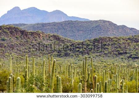 Organ Pipe Cactus National Monument - stock photo