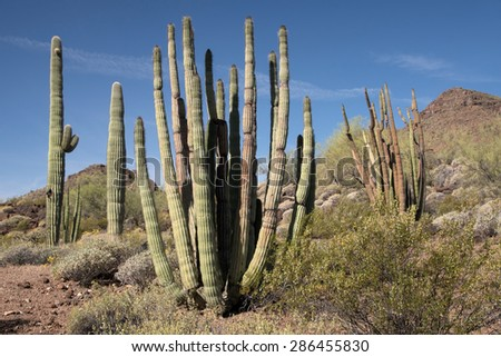 Organ Pipe Cactus National Monument is a U.S. National Monument and UNESCO biosphere reserve located in Arizona, USA.