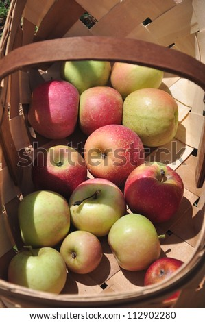 Organic apple farm in the mountains of North Carolina - stock photo