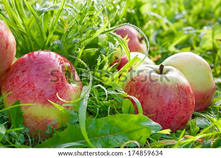 organic  apples in a garden on a green grass - stock photo