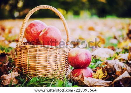 Organic apples in basket in summer grass. Fresh apples in nature