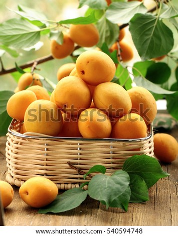 Organic apricots berries