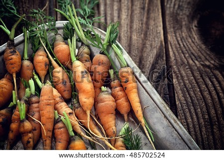 Organic carrots on wooden background