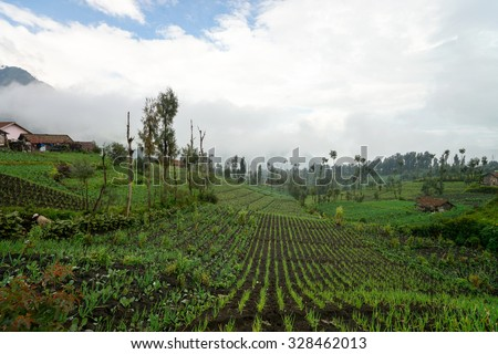 Organic farm in Cemoro Lawang, East Java, Indonesia. Most of the farmer still used a traditional method in their agriculture activities.