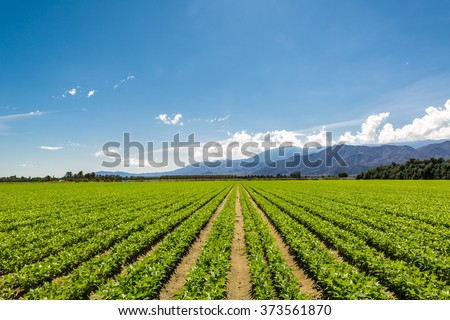 Organic Farm Land Crops In California - stock photo