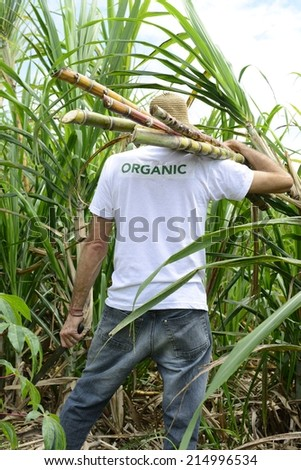 Organic farmer carrying sugar cane in front of plantation - stock photo