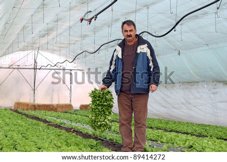 Organic farmer holding tray of seedlings in greenhouse. - stock photo