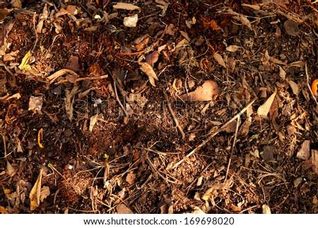 Organic Fertilizer, compost (leaf pile) - stock photo