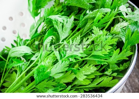 organic fresh bunch of parsley with drops in white colander
