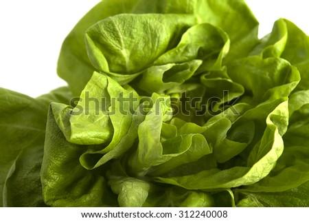 Organic fresh butter-head lettuce isolate on white. - stock photo