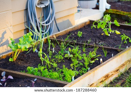 Organic garden beds with nice soil in this natural gardening color image.